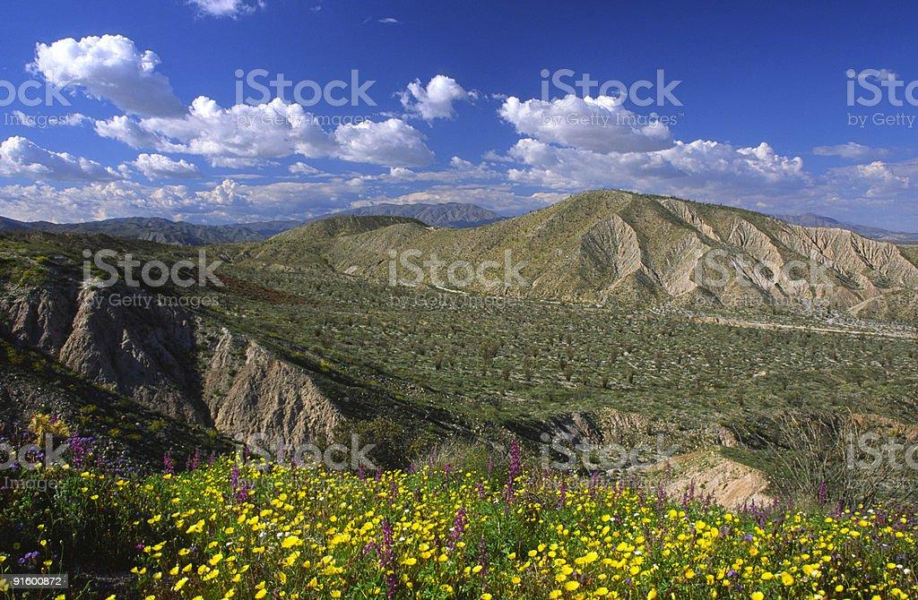 Spring bloom in Southern California desert stock photo