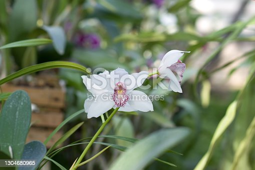 Spring bloom of a variety of orchids. Pink yellow white purple orchids. selective focus.Beautiful floral background. Copy spase