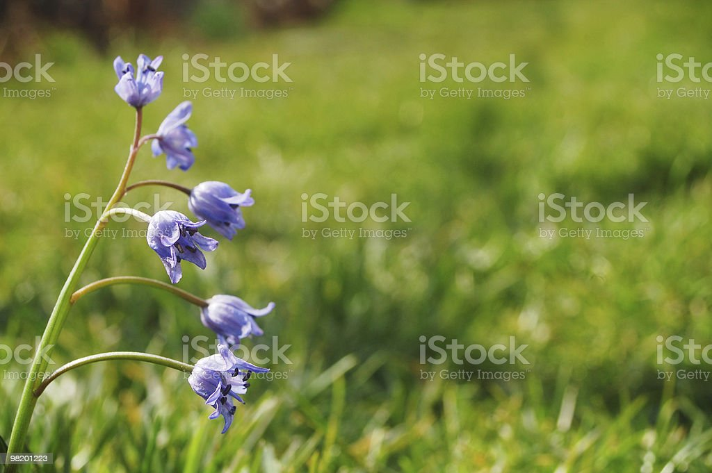 spring bloom royalty-free stock photo