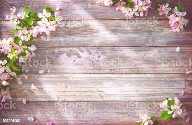 Spring blooming branches on wooden background picture id907206090?b=1&k=6&m=907206090&s=612x612&h=l hae0tgayqgq kzjovutsl80hgb13lof0mtei0oweg=