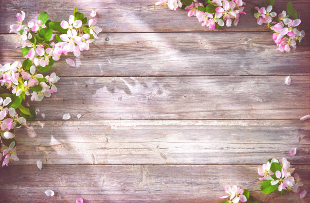 spring blooming branches on wooden background - happy birthday banner stock photos and pictures