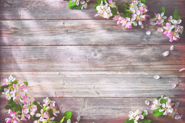 Spring blooming branches on wooden background stock photo