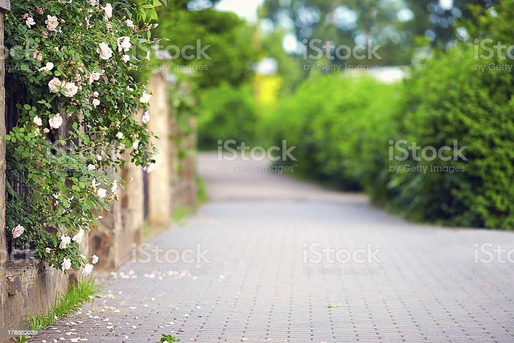 spring blooming sidewalk stock photo