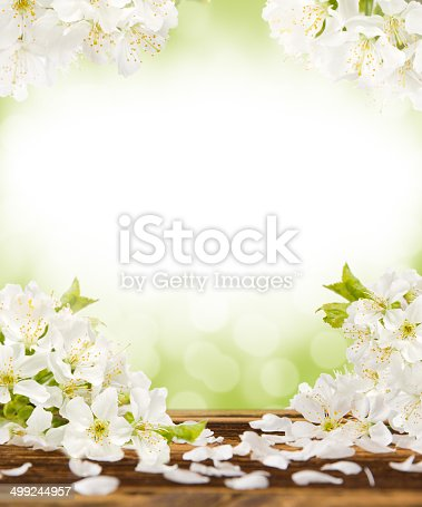 istock Spring blooms 499244957