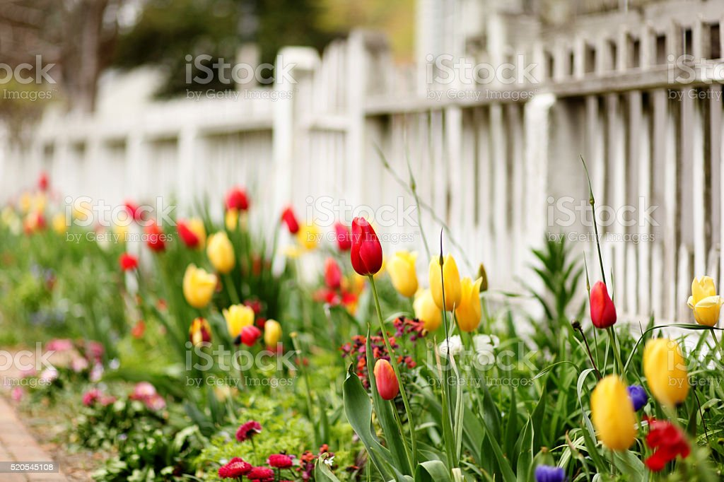 Spring Blooms stock photo