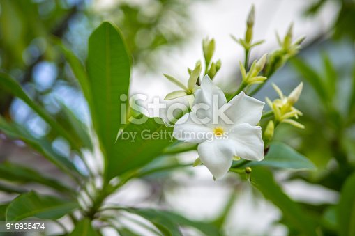 istock Spring blossom background - abstract floral border of green leaves and white flowers 916935474