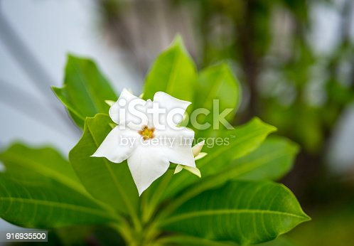 istock Spring blossom background - abstract floral border of green leaves and white flowers 916935500