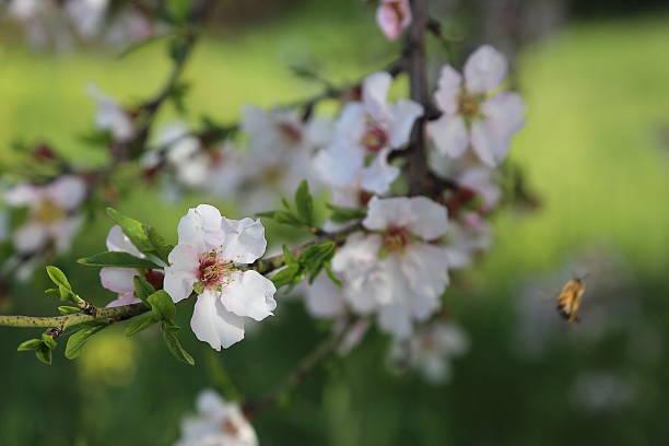 Frühling Blüte Hintergrund – Foto