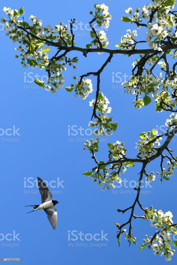 Spring blossom background vertical image stock photo