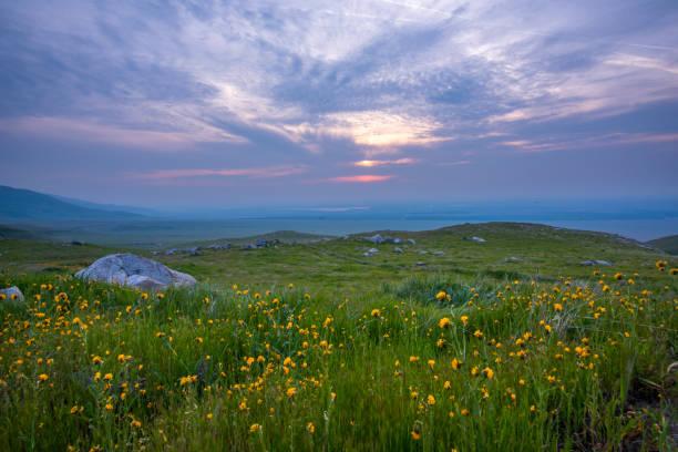 Spring Blossom Field stock photo