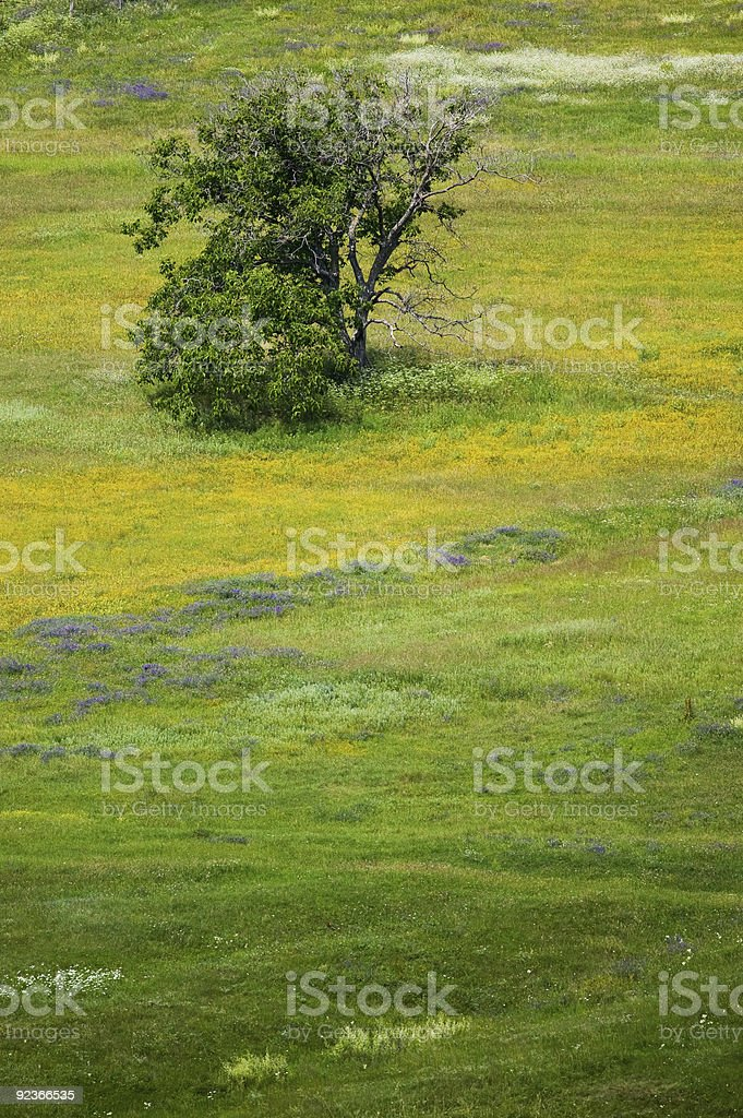 Spring blossom flowers of the field royalty-free stock photo