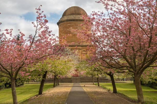 spring blossom in hamilton - mausoleum stockfoto's en -beelden