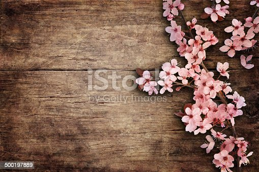 istock Spring Blossom over wood background. 500197889