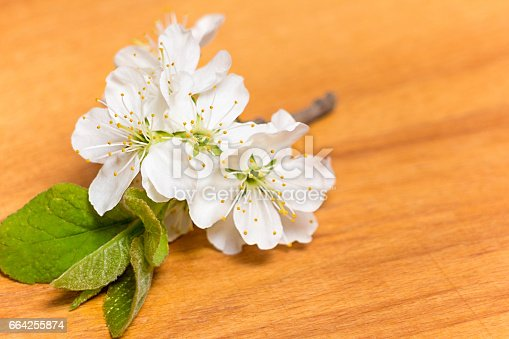 istock Spring Blossom over wooden background 664255874