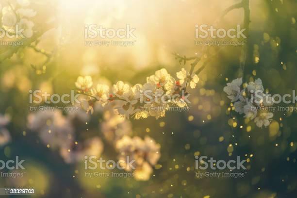 Spring blossom picture id1138329703?b=1&k=6&m=1138329703&s=612x612&h=czuhppzxednav12h 57jqonqn7wjmnifttgaehvr37c=