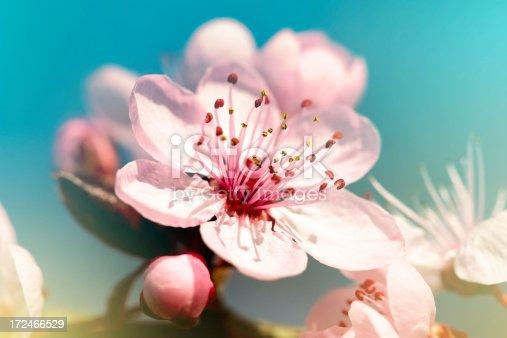 istock Spring blossom 172466529
