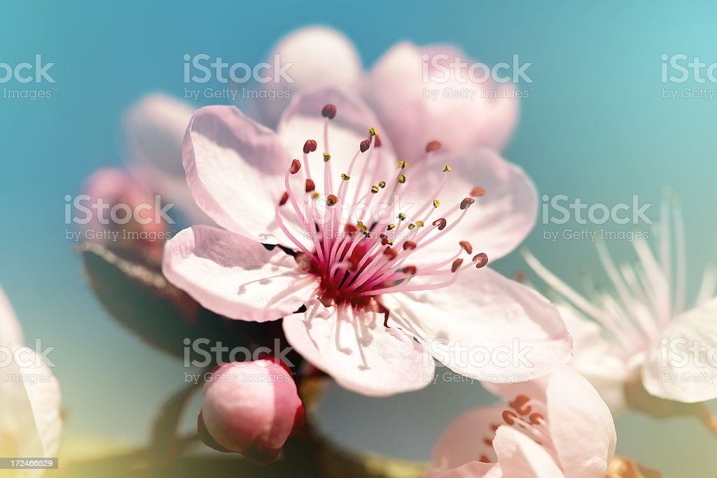 Spring blossom stock photo