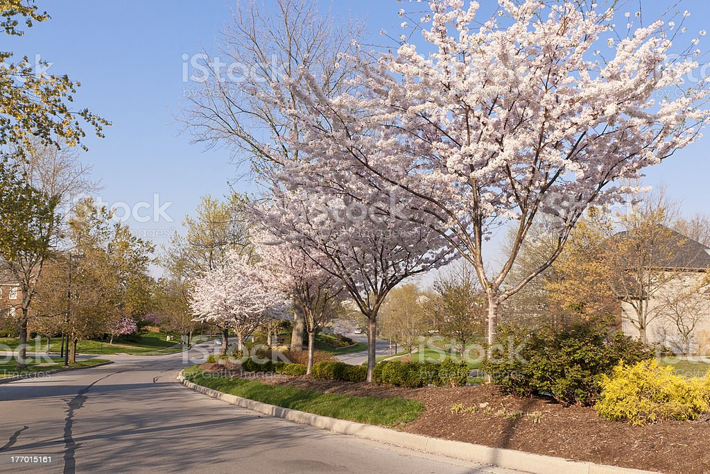 Frühlingsblüte (Spring blossom) – Foto