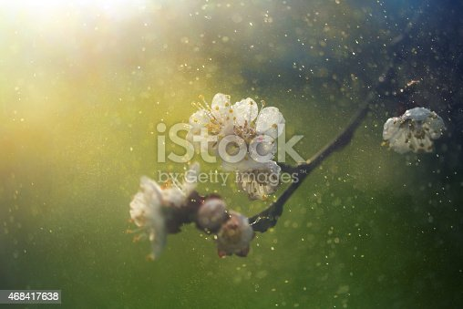spring blossom with defocused background