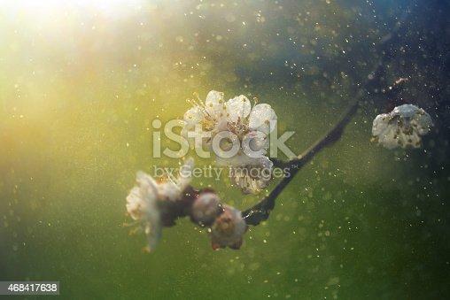 istock spring blossom 468417638