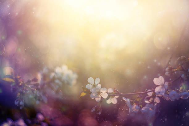 Spring blossom picture id470324956?b=1&k=6&m=470324956&s=612x612&w=0&h=43uc0lhn2qv9p9nwcqvpzlneeir bfmlcxspo0cdgtm=