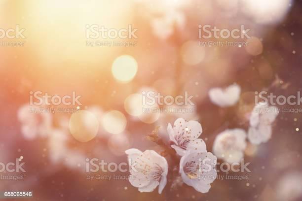 Spring blossom picture id658065546?b=1&k=6&m=658065546&s=612x612&h= nz36axswf2sfb5wrhnx111k88cdvlmdxlfpvbmhk1s=