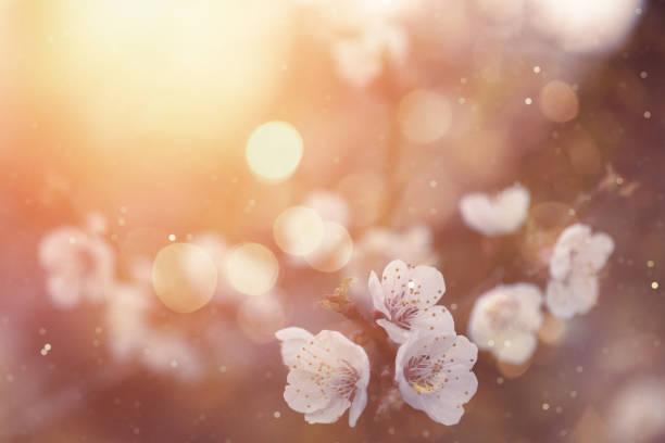 Spring blossom picture id658065546?b=1&k=6&m=658065546&s=612x612&w=0&h=eg 9dxh2rm7vrfg5cgodpo0gt sl ldmaajvsa tm5q=