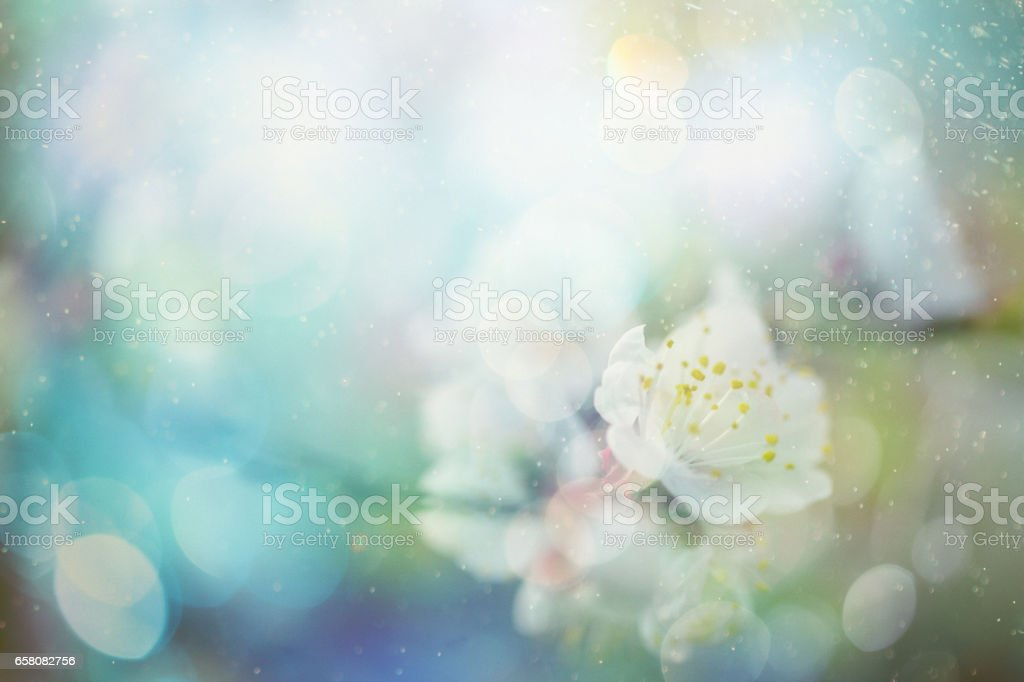 Spring blossom royalty-free stock photo