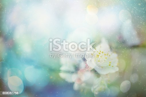 Springtime flowers selective focus