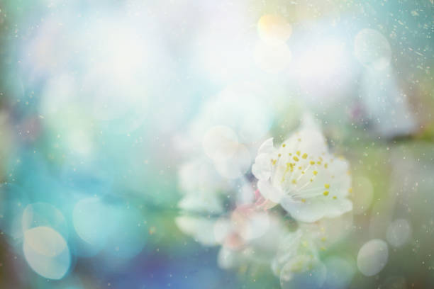 spring blossom - spring stock pictures, royalty-free photos & images