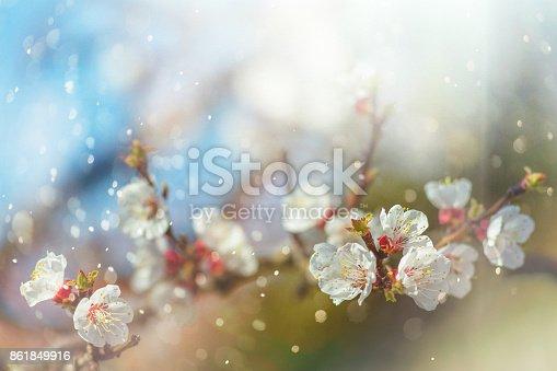 istock Spring blossom 861849916