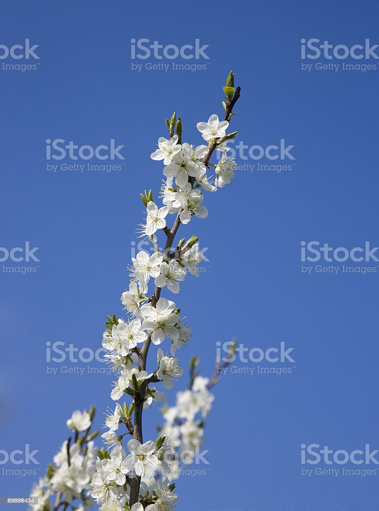 Пакет услуг Цветение весны Стоковые фото Стоковая фотография