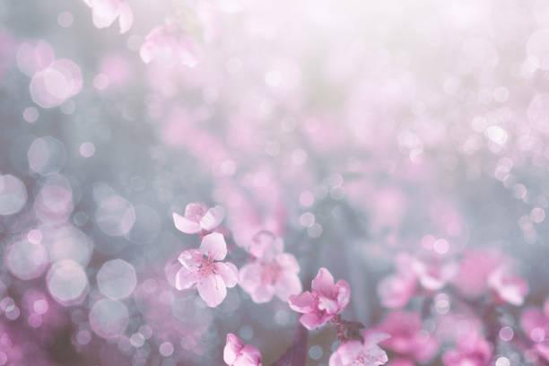 Spring blossom picture id908970898?b=1&k=6&m=908970898&s=612x612&w=0&h=0fo9ndep3v 59tz3o5bik7iapzhw5ncmmmlm8kvod3a=