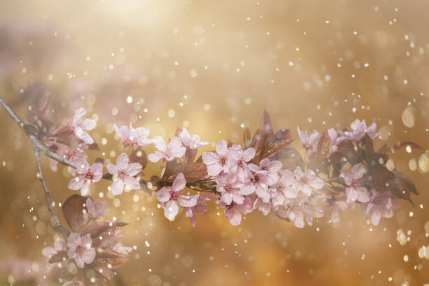 spring blossom - stamen stock photos and pictures