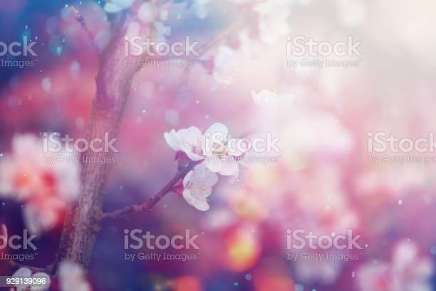 Spring blossom picture id929139096?b=1&k=6&m=929139096&s=612x612&h=1knt5k5tsh1shw5pvgszvg0mfpwpqgwb1me tu gbzu=