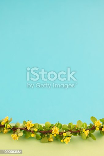 istock Spring blossoming barberry branch 1000993684