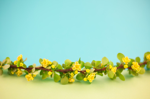 istock Spring blossoming barberry branch 1002660234