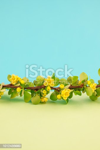 istock Spring blossoming barberry branch 1012435660