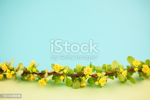 istock Spring blossoming barberry branch 1014408336