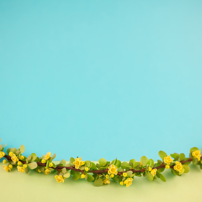 istock Spring blossoming barberry branch 1014408390