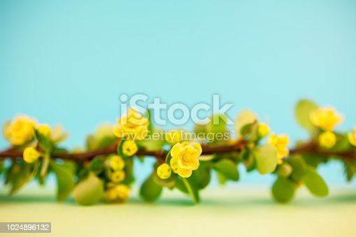 istock Spring blossoming barberry branch 1024896132