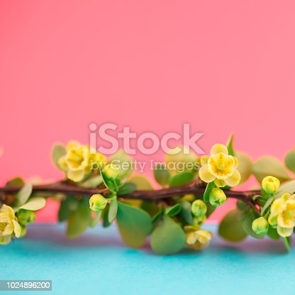 istock Spring blossoming barberry branch 1024896200