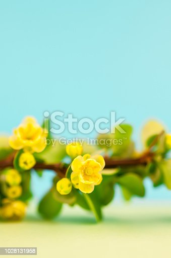 istock Spring blossoming barberry branch 1028131958