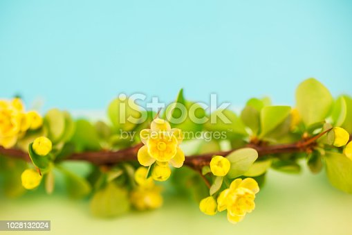 istock Spring blossoming barberry branch 1028132024