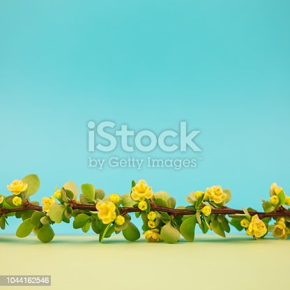 istock Spring blossoming barberry branch 1044162546