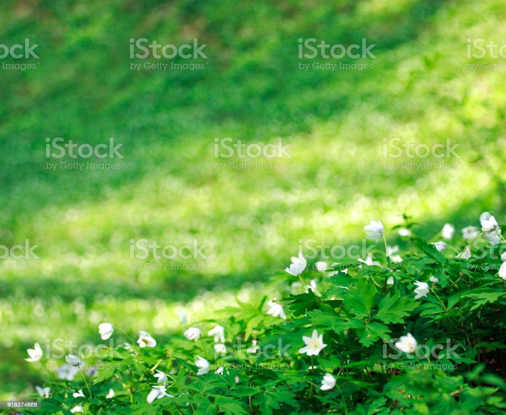 Blühende Waldwiese Blumenmischung