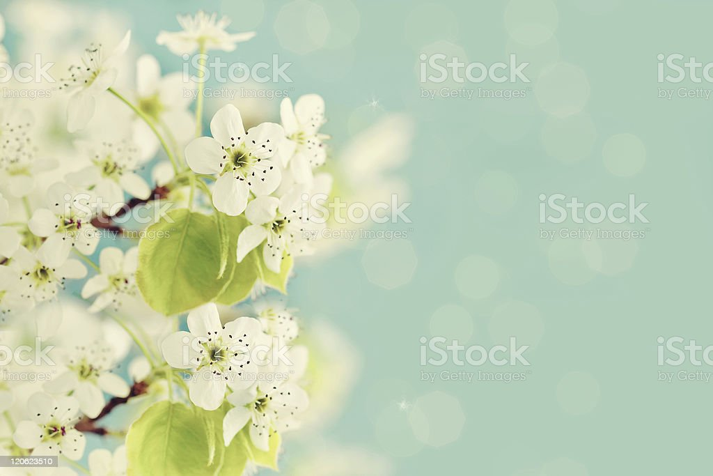 Photo De Le Printemps Eclot Image Libre De Droit Istock