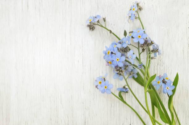 ramo de flores primavera miosótis azul sobre fundo de madeira claro - miosótis - fotografias e filmes do acervo