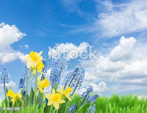 639245704 istock photo Spring bluebells and daffodils 914640760