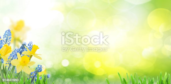 639245704 istock photo Spring bluebells and daffodils 914641650